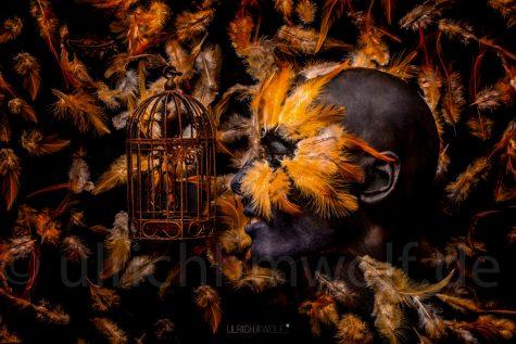 Bont_Wolf_Faces_The Birdcage